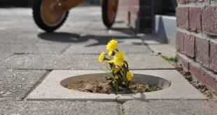طراحی گلدان با بلوکهای سنگفرش زنده!