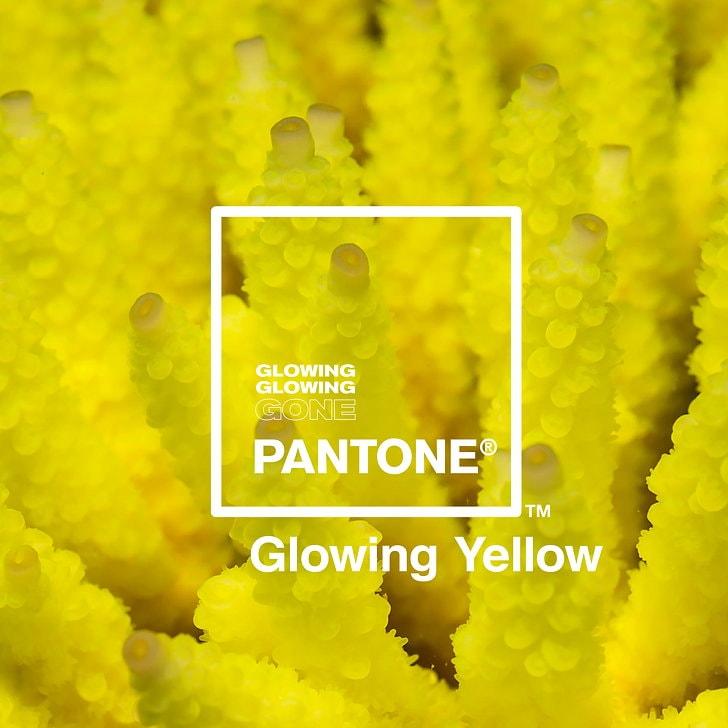 پویش رنگ شرکت پنتون و ادوبی برای مقابله با تغییرات آب و هوایی